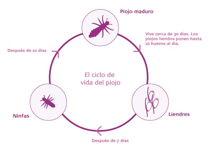 Cómo prevenir y tratar el contagio de piojos