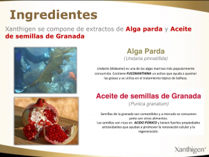 Xanthigen ingredientes
